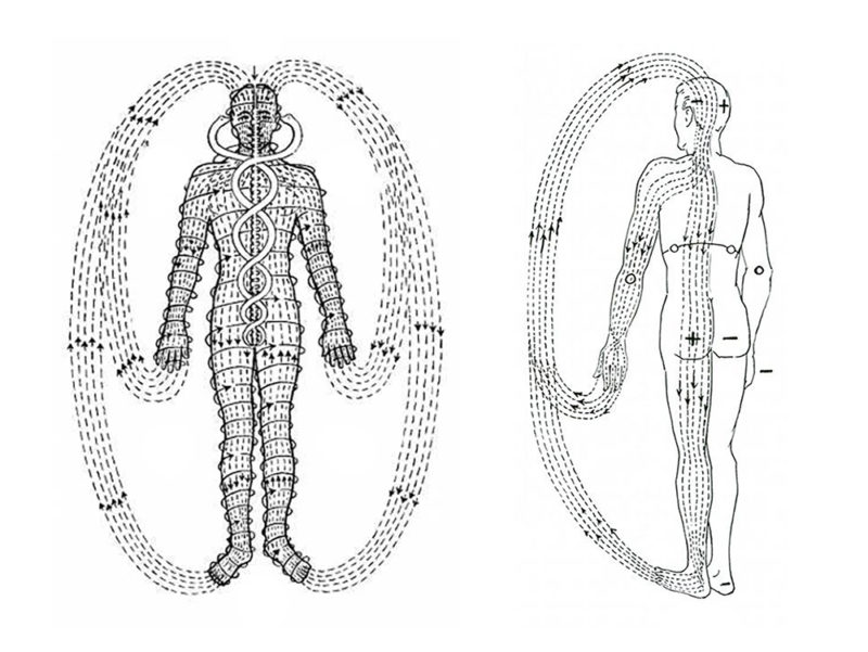 Figure 1. Human Body Polarity