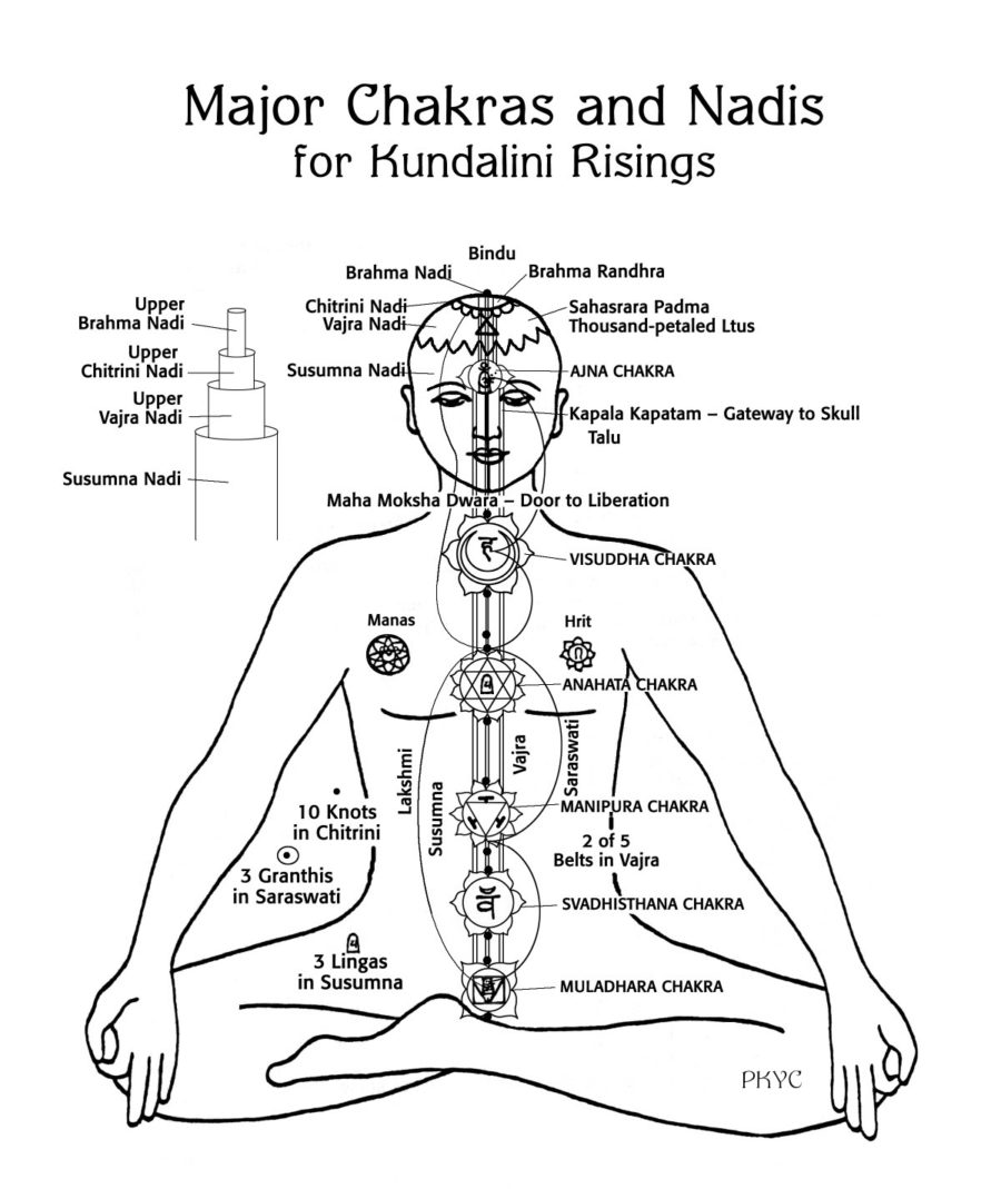 Figure 2. Major Nadis & Chakras in Kundalini rising